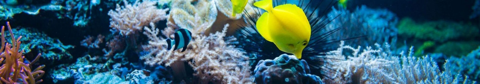 tropical-fish-on-a-coral-reef-colourfull-fishes-in-RSJAB9T-min